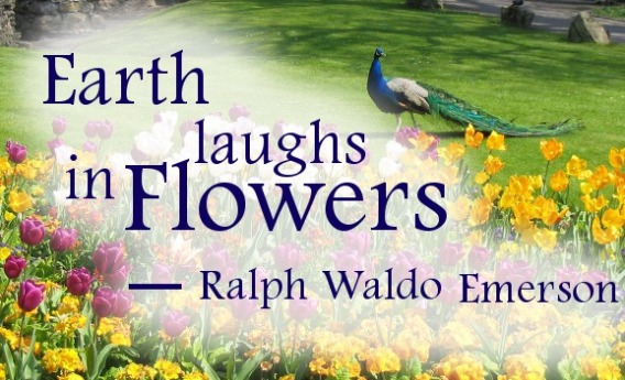 Earth laughs in flowers quote by Ralph Waldo Emerson writer against peacock and tulips garden