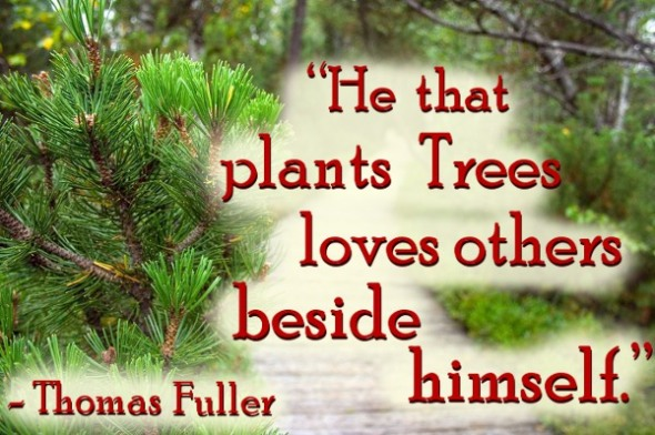 He that plants trees quote by Thomas Fuller against pine forest nature photo