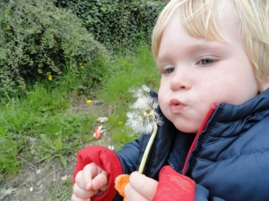 Blowing dandelion puffs