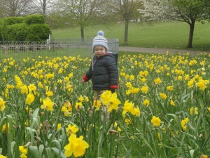 Child playing in daffodils
