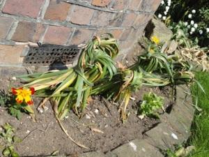 Tying daffodils