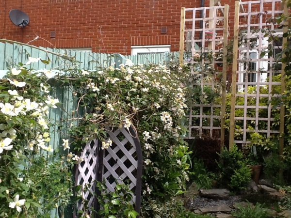 Lucy's trellis with montana clematis