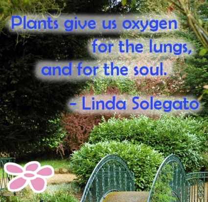 Plants give us oxygen for the lungs and for the soul