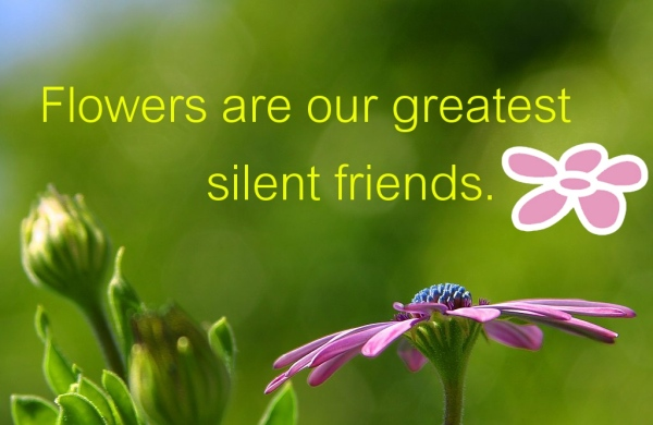 Flowers are our greatest silent friends