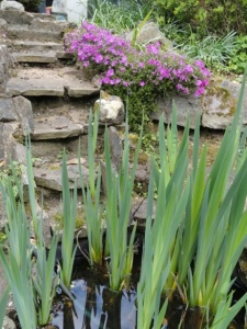 Stone path steps in garden