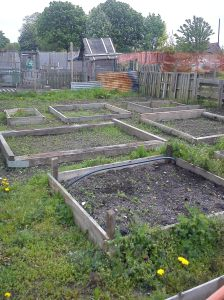 Craig's allotment beds