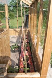 Inside Jackie's Greenhouse