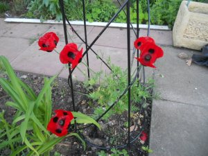 Lisa's Ladybird Poppies