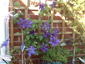 Purple Clematis on Trellis