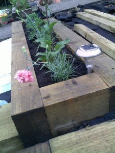 Mrs P - First Carnation - Raised Bed and Solar Light