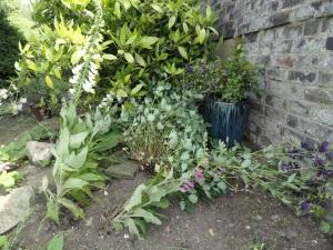 Charlotte's Plants