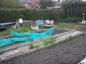 Craig's Allotment garden