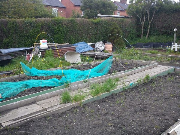 Craig's Allotment garden