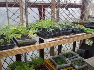 Craig's plants