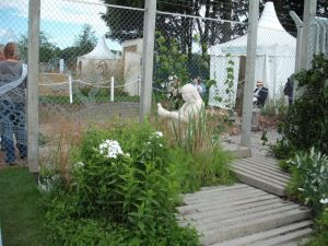 RHS Tatton World Without Torture garden