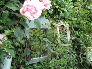 Garden mirrors and roses