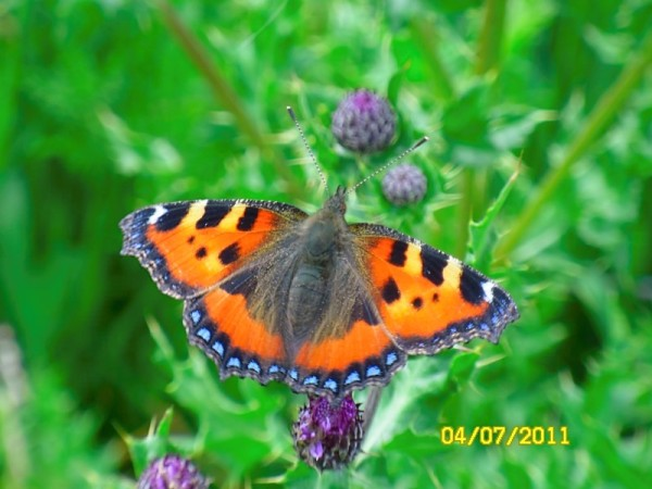 A beautiful butterfly in the garden