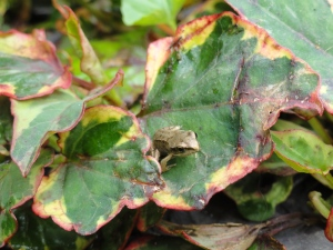 Tiny little frog on leaf