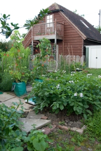 Jackie's potato patch - rabbits stay away