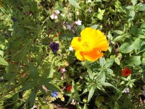 Mini meadow bursting into flower