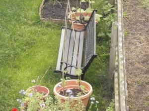 Bird on bench in garden