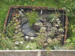 Birds at mini pond
