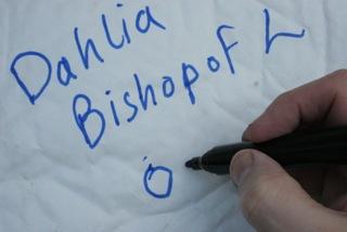 Label divided Dahlias