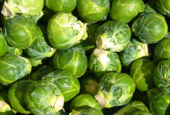 1 sprouts