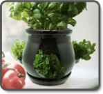 Ceramic Kitchen Herb Pot - Black