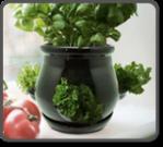 Ceramic Kitchen Herb Pot - Black
