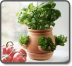 Ceramic Kitchen Herb Pot - Terracotta