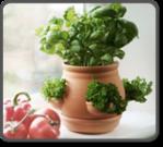 Ceramic Kitchen Herb Pot - Terracotta