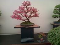 A glorious bonsai tree!