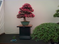 Another bonsai tree.