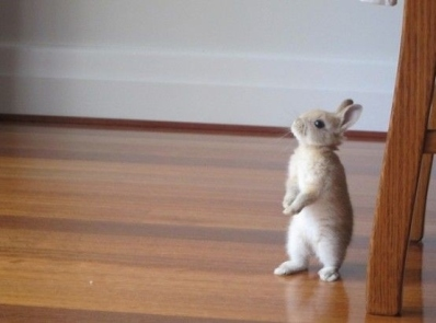 What is this bunnny rabbit thinking