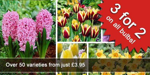 3 for 2 on spring bulbs from Primrose
