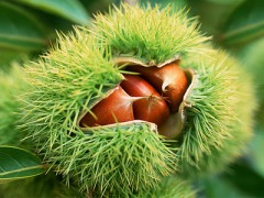 Chestnut Recipe