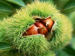 Chestnut Recipe