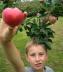 A successful apple harvest!