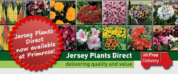 Jersey Plants at Primrose